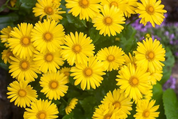 Natuurlijke zomer achtergrond met gele bloemen
