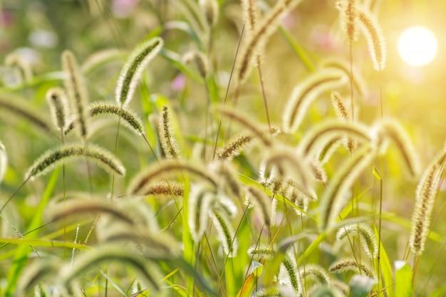 Natuuromgeving flora cultuur buiten