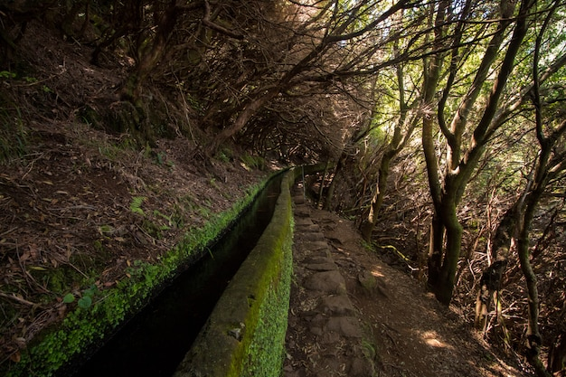 Natuurpad genaamd levada van 25 lettertypen gelegen op het eiland madeira