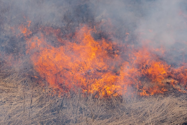 Natuurramp in het voorjaarsbos - droog gras verbranden in de weide. zachte focus, vervaging van sterk wildvuur.