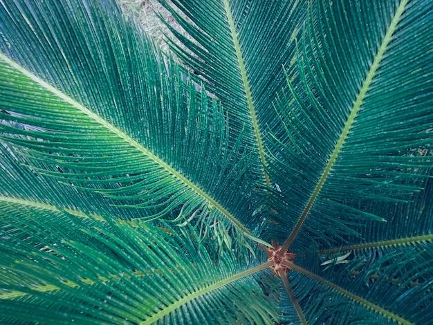 Natuurverlof voor abstract achtergrond Premium Foto