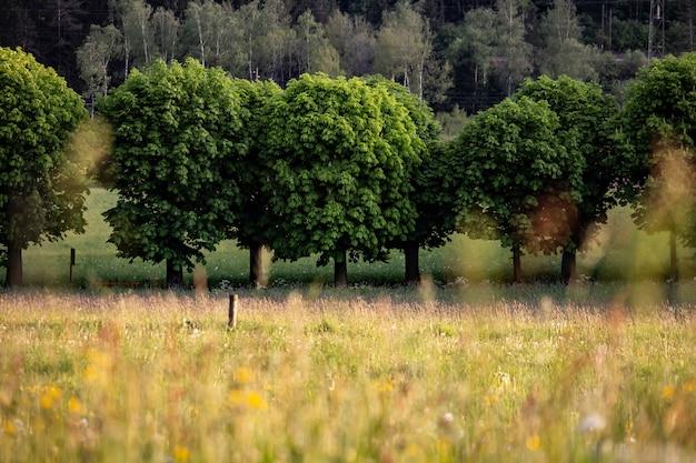Natuurweg met grote bomen in het bos