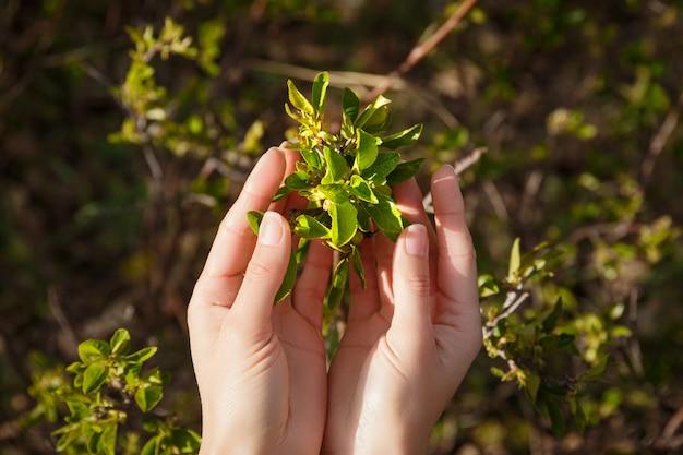 Natuurzorg, jonge vrouwelijke hand aanraken van groene bladeren, boomtak, bescherming van de natuur, groene, milieuvriendelijke levensstijl