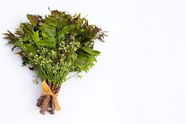 Neem bladeren en bloemen