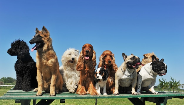 Negen honden