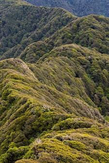 Neill ridge beukenbos, tararua forest park, nieuw-zeeland