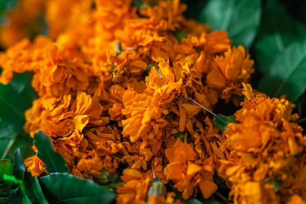 Nep of imeritinsky saffraanbloemen goudsbloemen