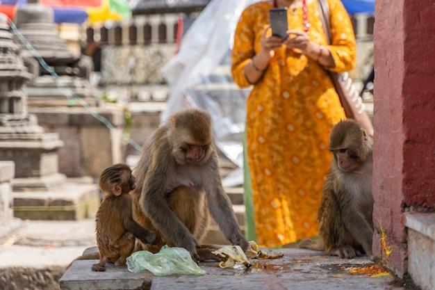 Nepalese vrouw die een foto van apen maakt bij swayambhunath-tempel of monkey temple in kathmandu, nepal. stock foto