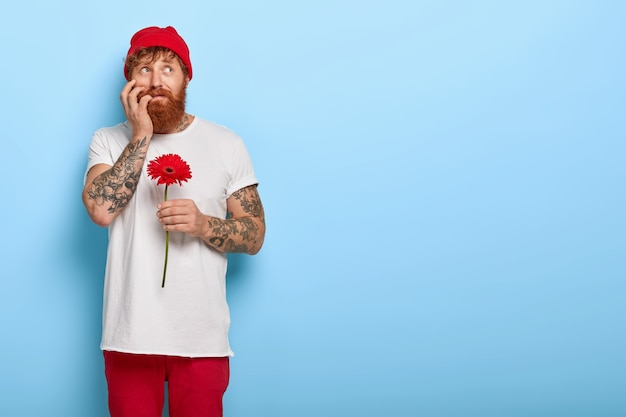 Nerveuze hipster met rode dikke baard, houdt rode gerbera vast, bijt vingernagels, maakt zich zorgen voor eerste date met vriendin, draagt hoed en wit casual t-shirt geïsoleerd op blauwe muur. man met bloem