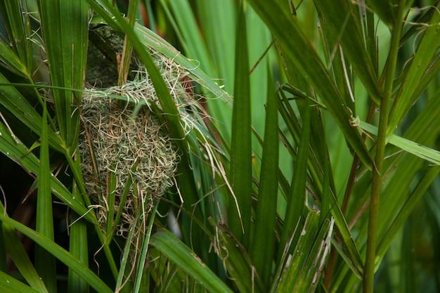 Nest gemaakt van hooi.