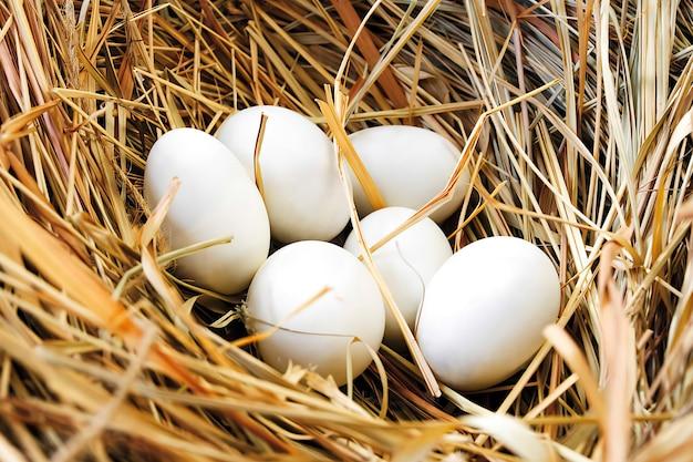 Nest met eieren, close-up