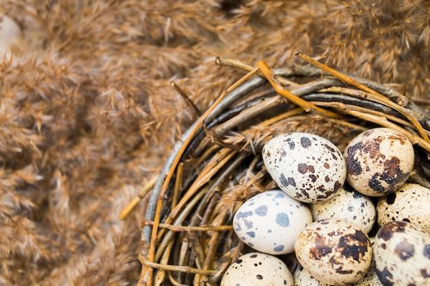 Nest met eieren van kwartels