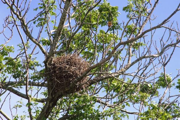 Nest van vogels in de lente