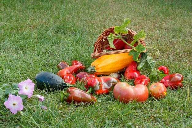 Net geplukt courgette, aubergine, tomaat en paprika met een rieten mand en bloemen op groen gras. net groenten geoogst.