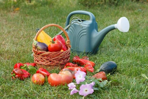 Net geplukte courgette, aubergine, tomaat en paprika met bloemen en rieten mand, hark en gieter op groen gras. net groenten geoogst.