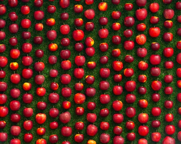 Nette opstelling van rijen verse rode appels op een groen gras