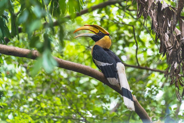 Neushoornvogels, vogel op de boom