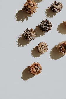 Neutrale bloemensamenstelling met droge bloemknoppen op grijs