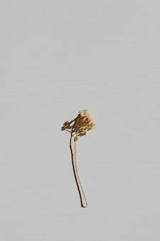 Neutrale bloemensamenstelling met droge bloemtak op grijs