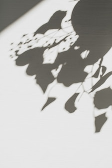 Neutrale bloemensamenstelling met het silhouetschaduw van de boomtak
