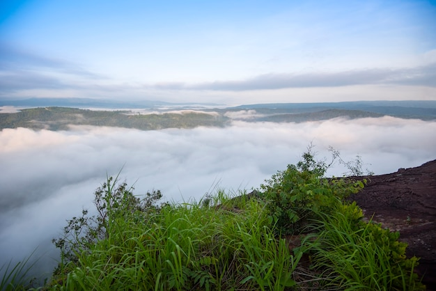 Nevelig bergboslandschap in de mist van de ochtendzonsopgang en bosboommening bovenop