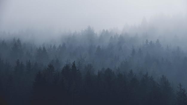 Nevelig bos in de bergen
