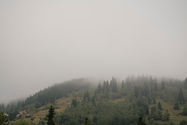 Nevelig bos op een berghelling in een natuurreservaat. berg in de mist.
