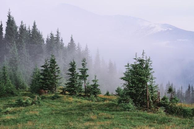Nevelig karpaten berglandschap met sparrenbos, de toppen van bomen die uit de mist steken.