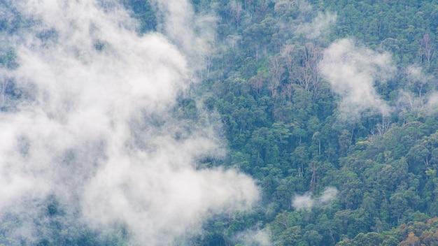 Nevelig landschap met bos