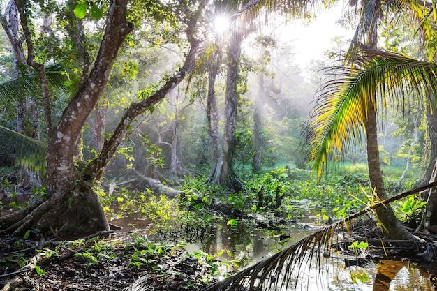Nevelig regenwoud in costa rica, midden-amerika
