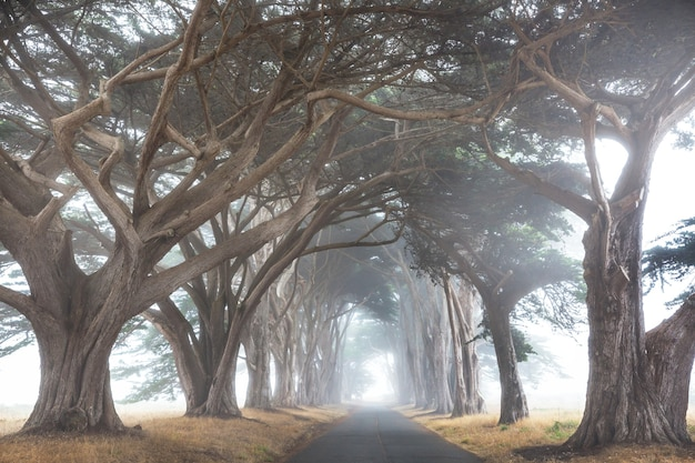Nevelige bomensteeg in mistig weer.