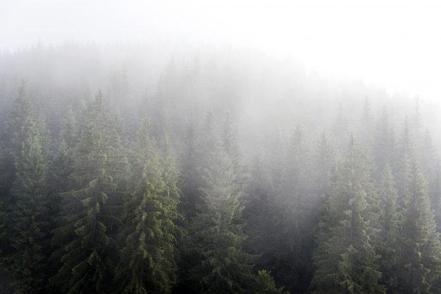 Nevelige mist in dennenbos op berghellingen in de karpaten. landschap met mooie mist in bos op heuvel.