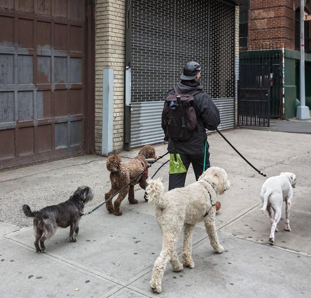 New york, verenigde staten - 2 mei 2016: new york city dog walker. dieren en hun baasjes in de straten van de grote stad. honden in de straten van nyc.