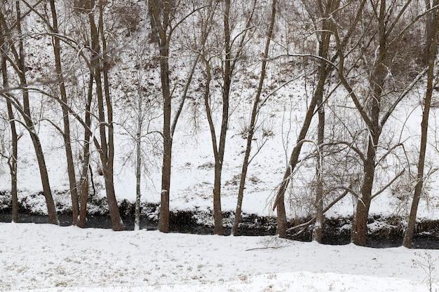 Niet bevroren kreek in het winterseizoen, aan de rand van bomen groeien