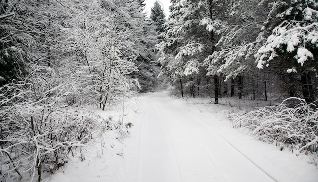 Niet geasfalteerde weg gelegen in het bos in een winterseizoen.
