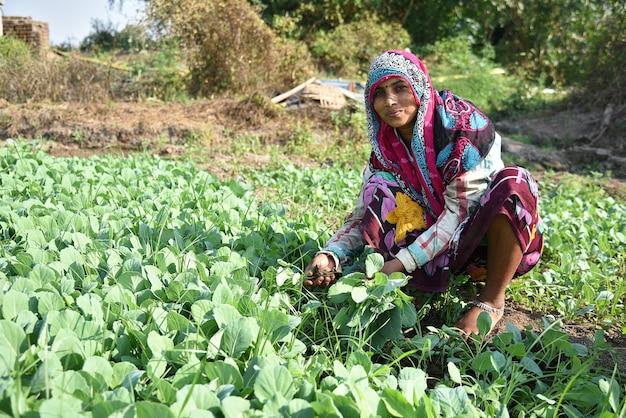 Niet-geïdentificeerde indiase landarbeider kool planten in veld en bos van kleine plant van kool in handen houden op de biologische boerderij.