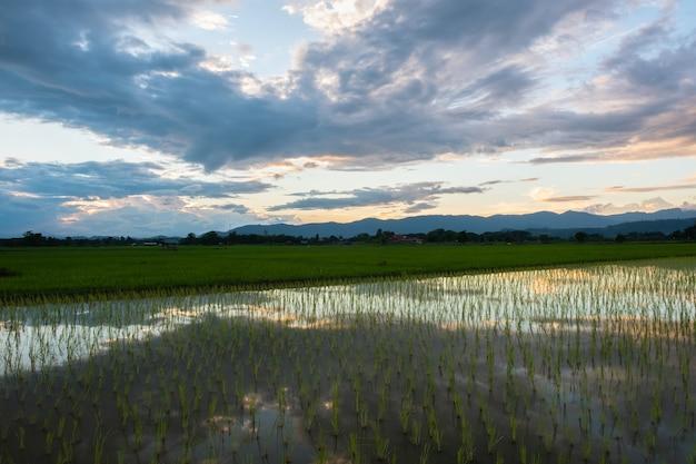 Nieuw aangeplante rijstvelden en oude hutten. landelijke velden op het platteland.