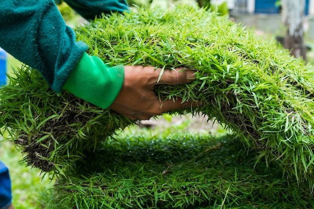 Nieuw gras planten