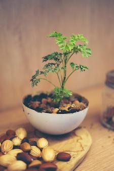 Nieuw leven concept, zaaien van planten in de natuur