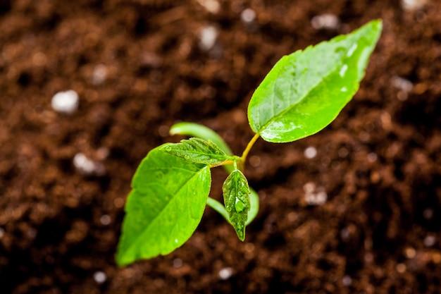 Nieuw leven. jonge spruit in de lente, close-up.