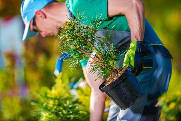 Nieuwe bomen planten