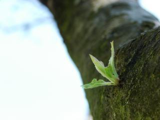 Nieuwe leven, de natuur