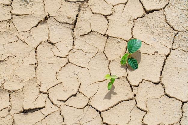 Nieuwe plant ontkiemt uit het scheurvuil van overleving