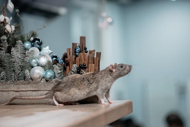 Nieuwjaar concept. leuke bruine binnenlandse rat in het decor van een nieuwjaar. het symbool van 2020 is een rat