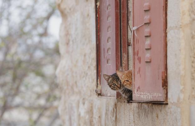 Nieuwsgierig aanbiddelijk katje twee die achter venster verbergen