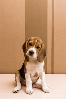 Nieuwsgierig beagle puppy op zoek