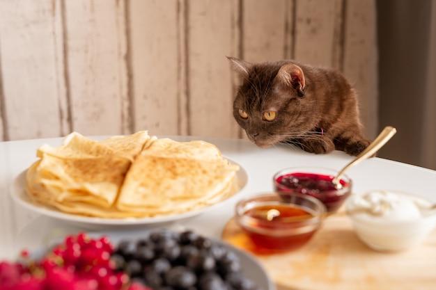 Nieuwsgierige bruine kat die smakelijke pannenkoeken ruikt terwijl hij over tafel bukt, geserveerd met zelfgemaakt eten voor het ontbijt in de keuken