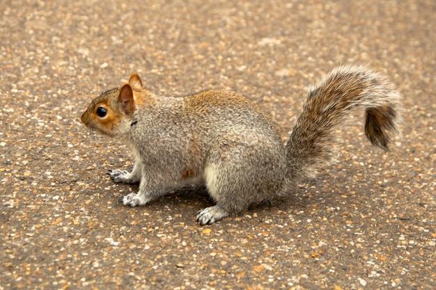 Nieuwsgierige eekhoorn in het park