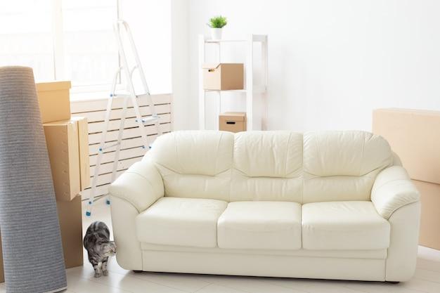 Nieuwsgierige grijze scottish fold kat verkent na verhuizing een nieuw appartement. het concept van het dierenleven in het appartement en het verzorgen van katten.