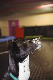 Nieuwsgierige hond die omhoog kijkt